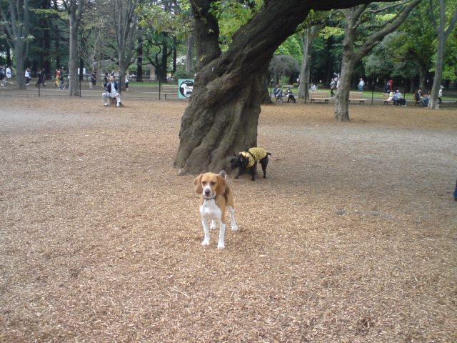おまけ・代々木公園