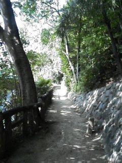 緑陰の小道